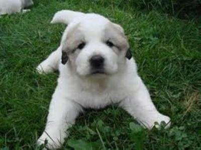 Кому и когда можно заводить собак?