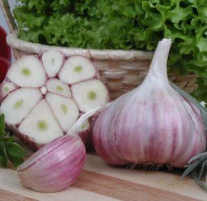полезный овощ чеснок